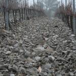 terroir vignes en hiver (Copier)
